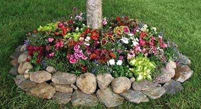 Bloemen En Steentjes Om Boom Heen