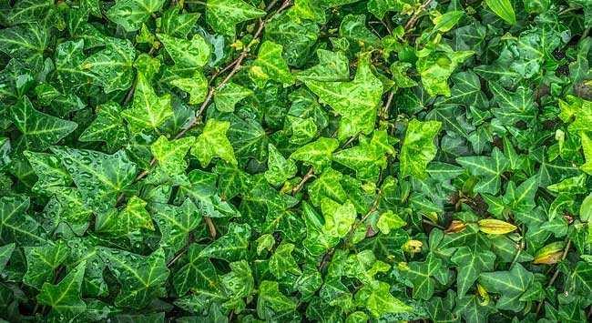 Planten In Je Schaduw Of Halfschaduw Tuin